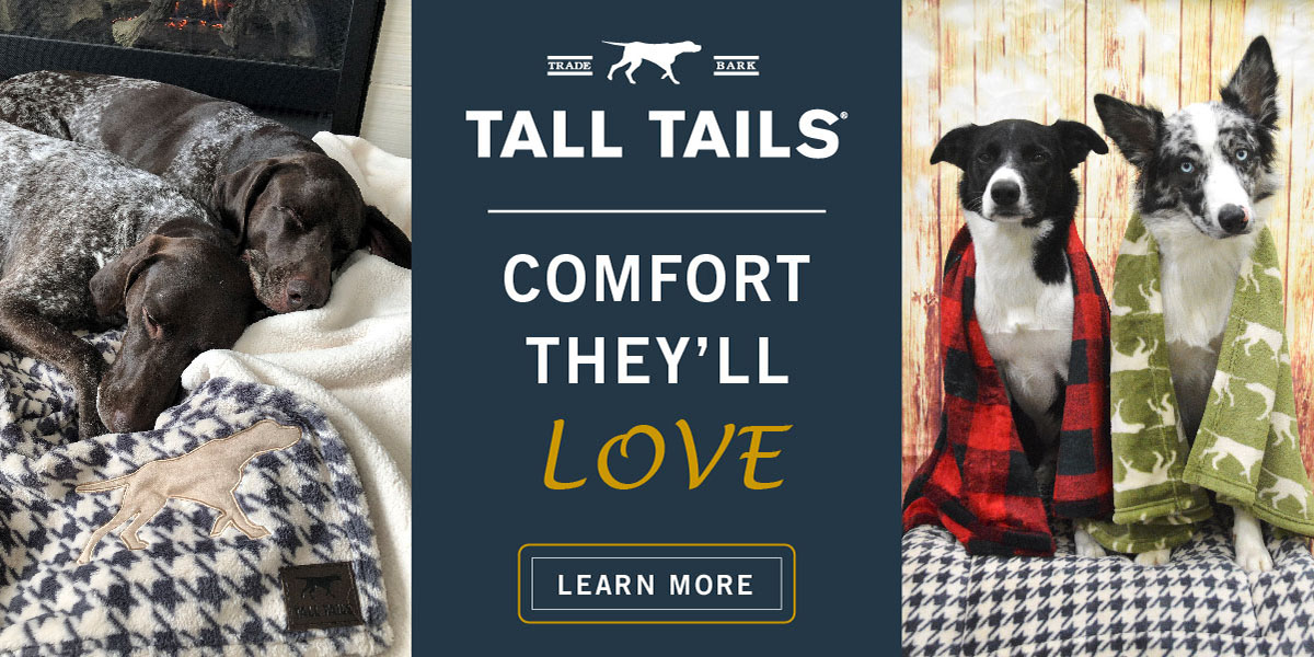 Buy a Blanket to provide unconditional comfort and security